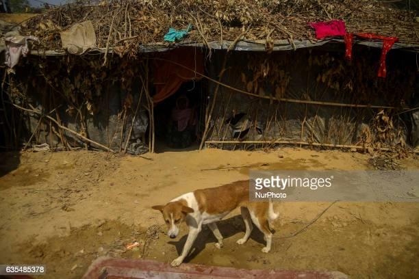 A dog is seen at the makeshift Balu Khali Rohingya refugee camp on February 15 2017 in Bangladesh Almost 2000 thousand Rohingya family arrived at...