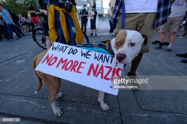 A dog is seen during a rally on the waterfront in Portland Ore United States on August 18 to show solidarity against hate with Charlottesville Va one...