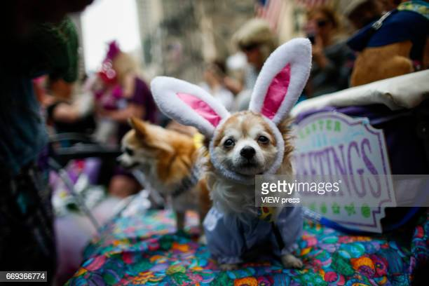 A dog is seen during the Annual Easter parade on April 16 2017 in New York City The Easter Parade and Easter Bonnet Festival is characterized by...