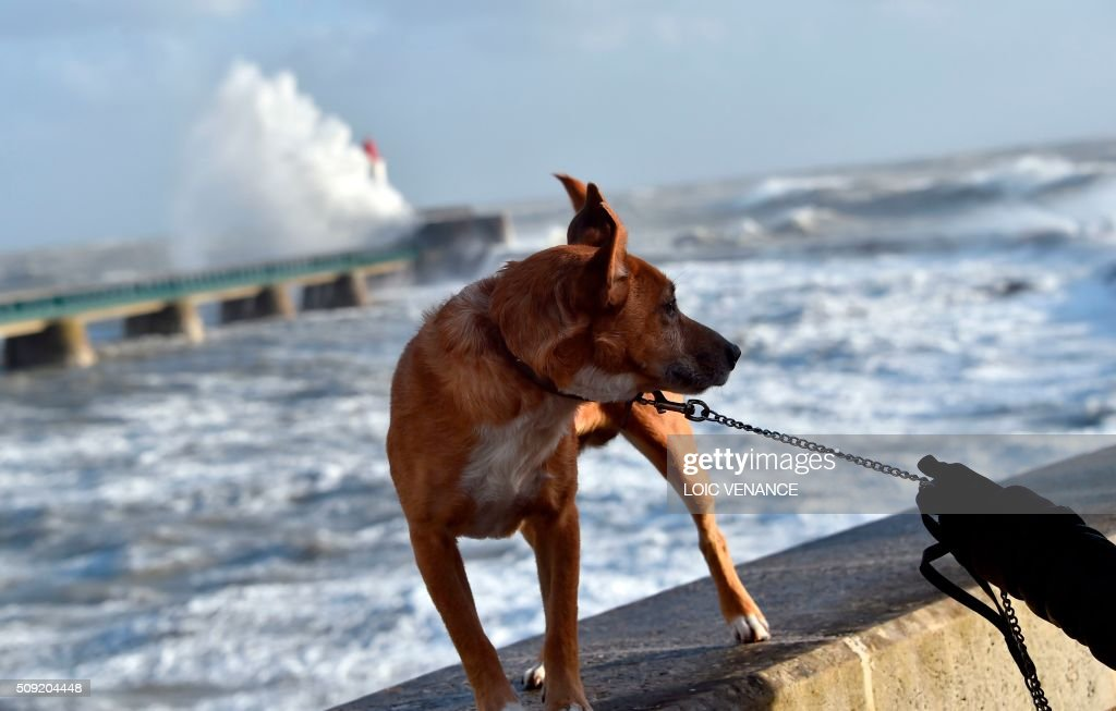 A dog is taken for a walk as a wave breaks at a pier in the background in Les Sables-d'Olonne, western France, on February 9, 2016. High winds buffeted northwestern Europe on February 8, leaving one woman in France in a coma after she was hit by an advertising hoarding. Electricity was cut to 5,000 homes in northern France. / AFP / LOIC VENANCE