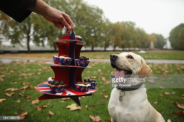 A dog is teased with some dog treats outside The Houses of Parliament during the Westminster Dog of The Year competition in Victoria Tower Gardens on...