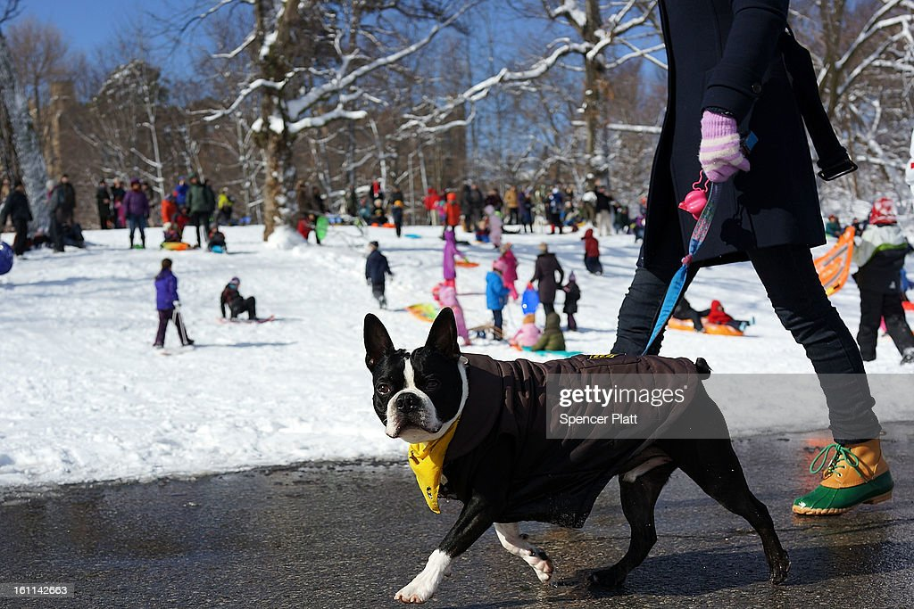 A dog is walked in Prospect Park in Brooklyn the morning after a massive snow storm on February 9, 2013 in New York City. New Yorkers woke up to over 10 inches of snow Saturday morning while parts of New England received over thirty inches following a storm that brought high winds and blizzard like conditions to the region.