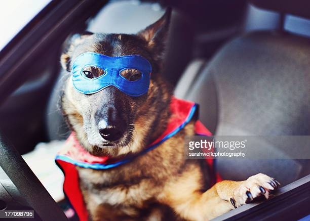 Dog istting in car with superhero costume