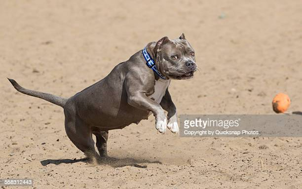 Dog jumping at the beach