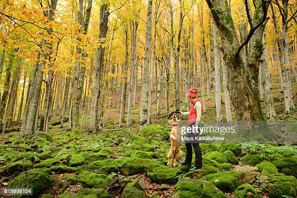 Dog jumping for a stick held by a girl in the forest