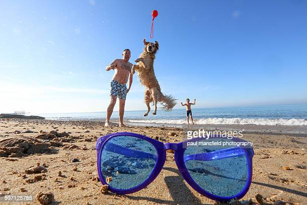 Dog jumping for ball on beach