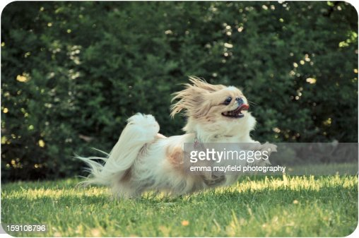 dog jumping : Stock Photo