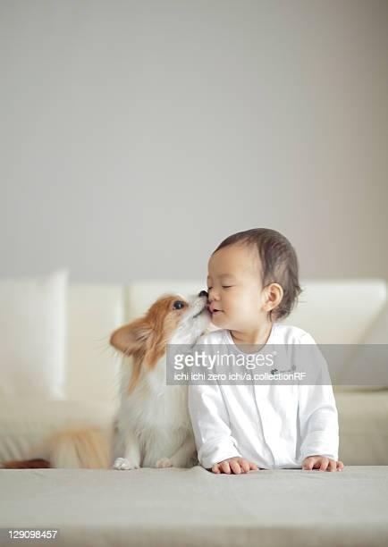 Dog kissing baby girl