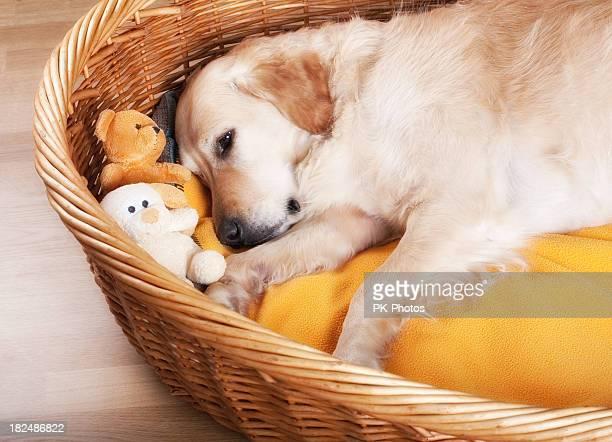 Schlafen Hund