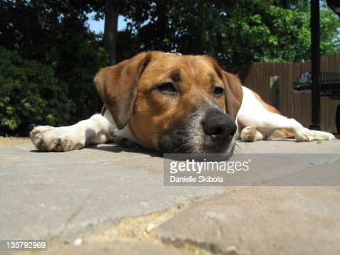 Dog laying on patio