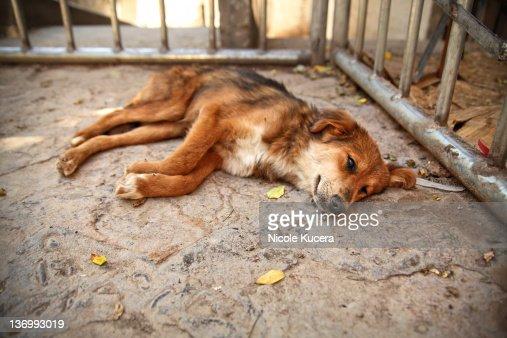 Dog laying on street : Stock Photo