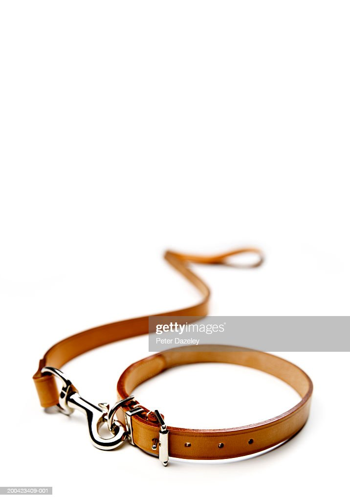 Dog lead and collar : Stock Photo