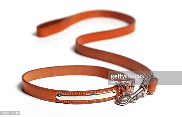 Dog lead with copy space