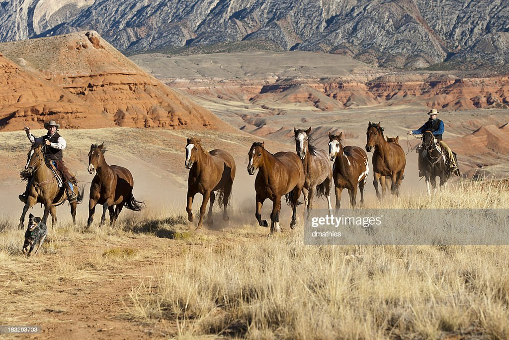 Dog leads as Cowboys drive horses : Stock Photo