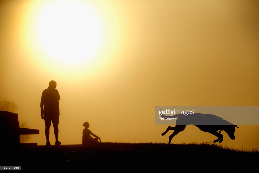 A dog leaps in the grass on the summit of Mt Eden as the sun struggles to shine through a blanket of fog over Auckland City on May 4, 2016 in Auckland, New Zealand. The morning fog disrupted flights and ferry services in the city.