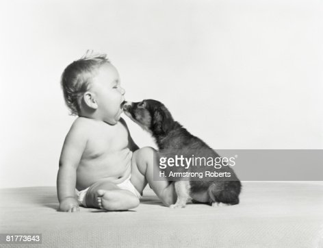 Dog licking baby. : Foto stock