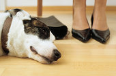 Dog lies at feet of lady owner