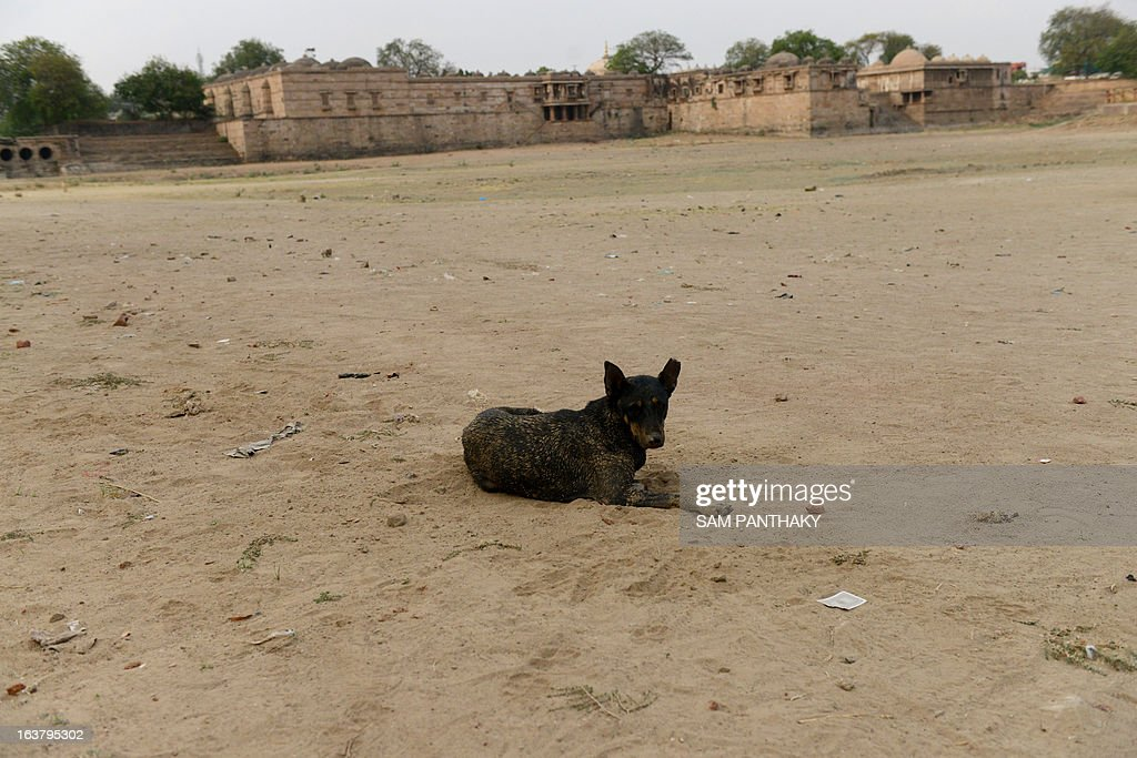 A dog lies on the dry bed of the Ahmad Sar Lake at Sarkhej Roza, the 15th century monument which houses the tomb of Saint Ahmed Khattu Baksh, spiritual counselor of Ahmedabad city's founder Ahmed Shah, southwest of Ahmedabad on March 16, 2013. Many districts of western Gujarat state, which received less monsoon rain than normal last year, are experiencing water scarcity. AFP PHOTO / Sam PANTHAKY