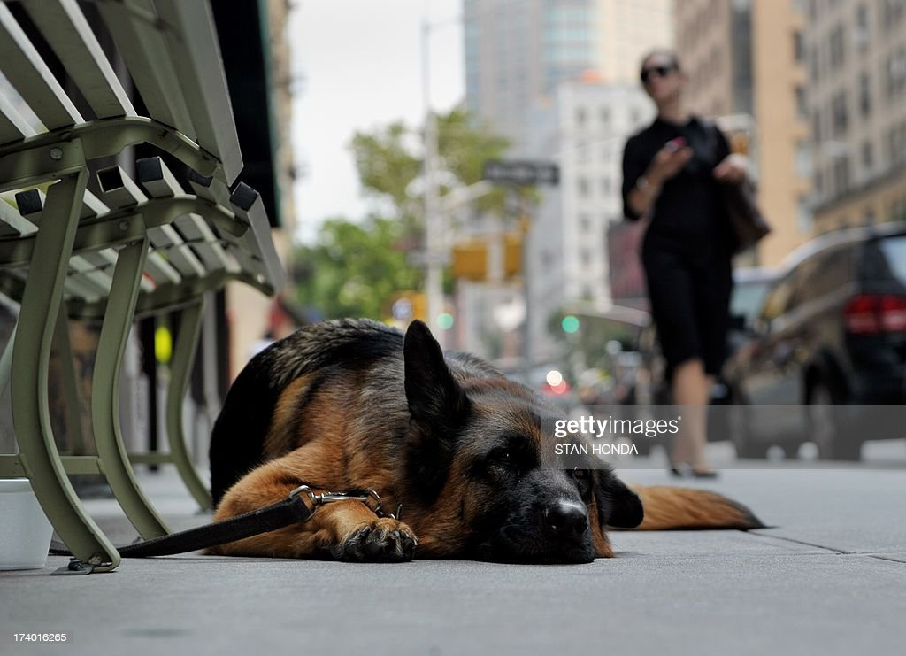A dog lies on the sidewalk by a shop on Madison Avenue on July 19, 2013 in New York as a heatwave continues in the northeast. AFP PHOTO/Stan HONDA