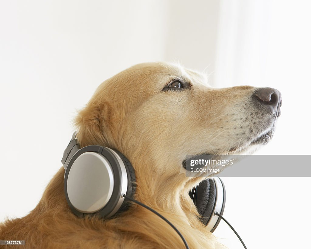 Dog Listening To Music Stock Photo | Getty Images