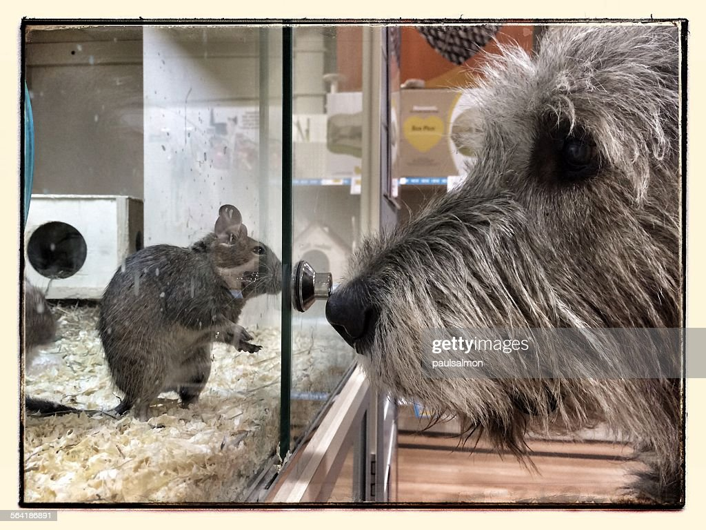 Dog looking at a mouse in a cage in a pet store