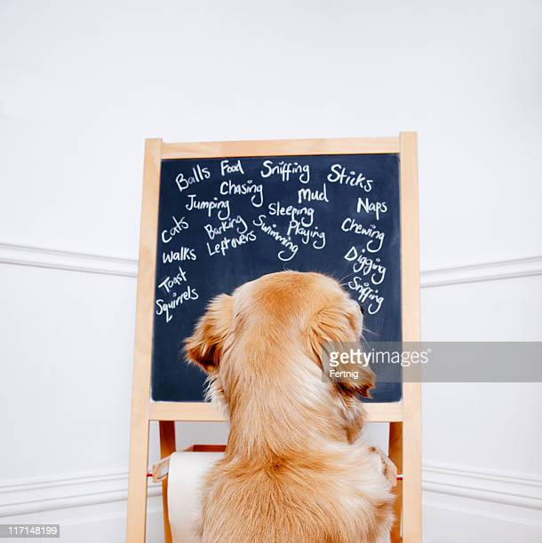 Dog looking at doggy thoughts on a blackboard