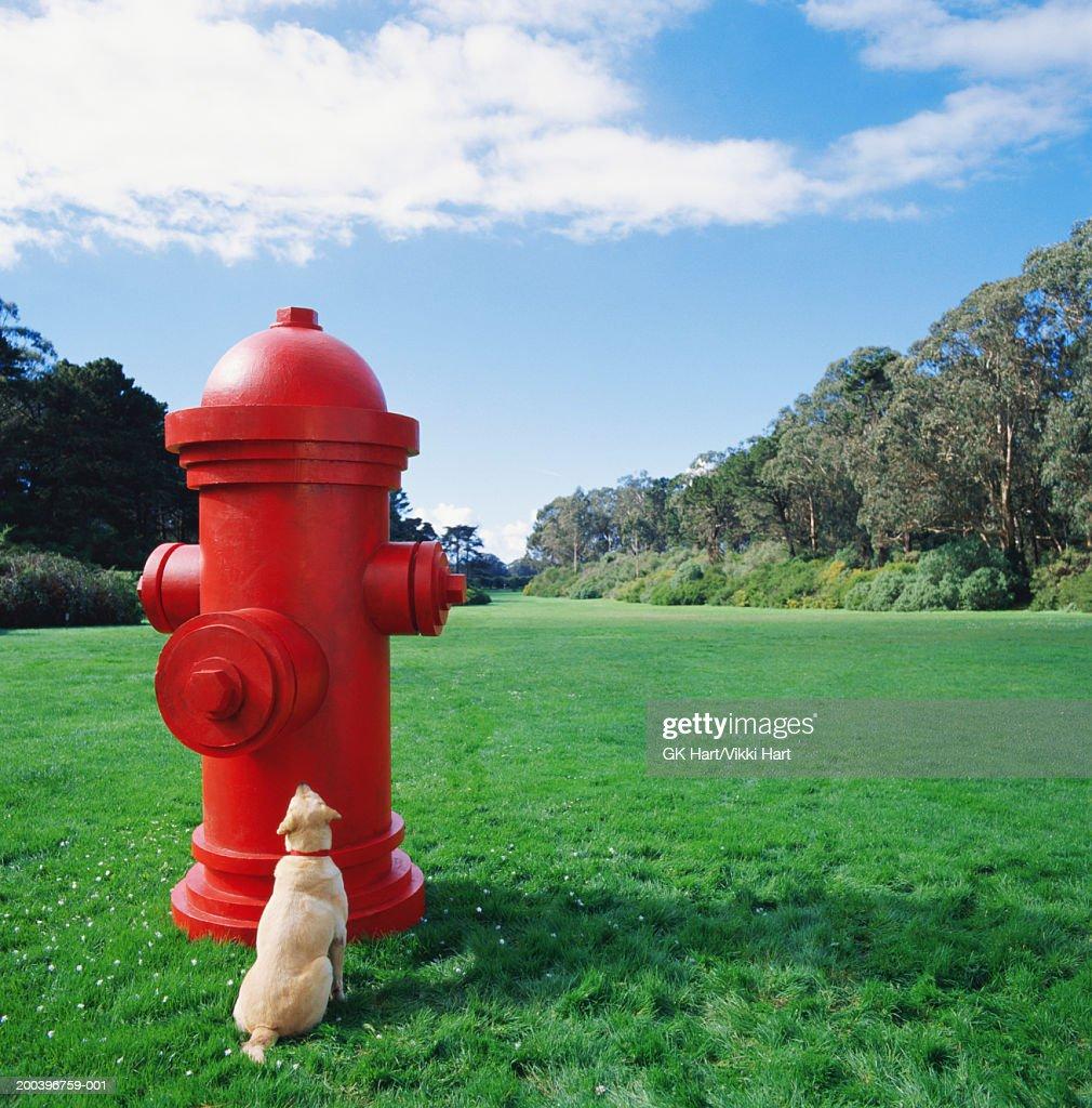 Dog Fire Hydrant Canada