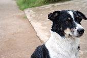 Black and white dog, soft focus, street dog