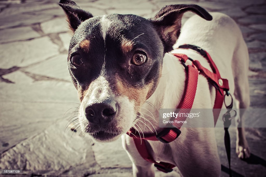 Dog looking at you : Stock Photo