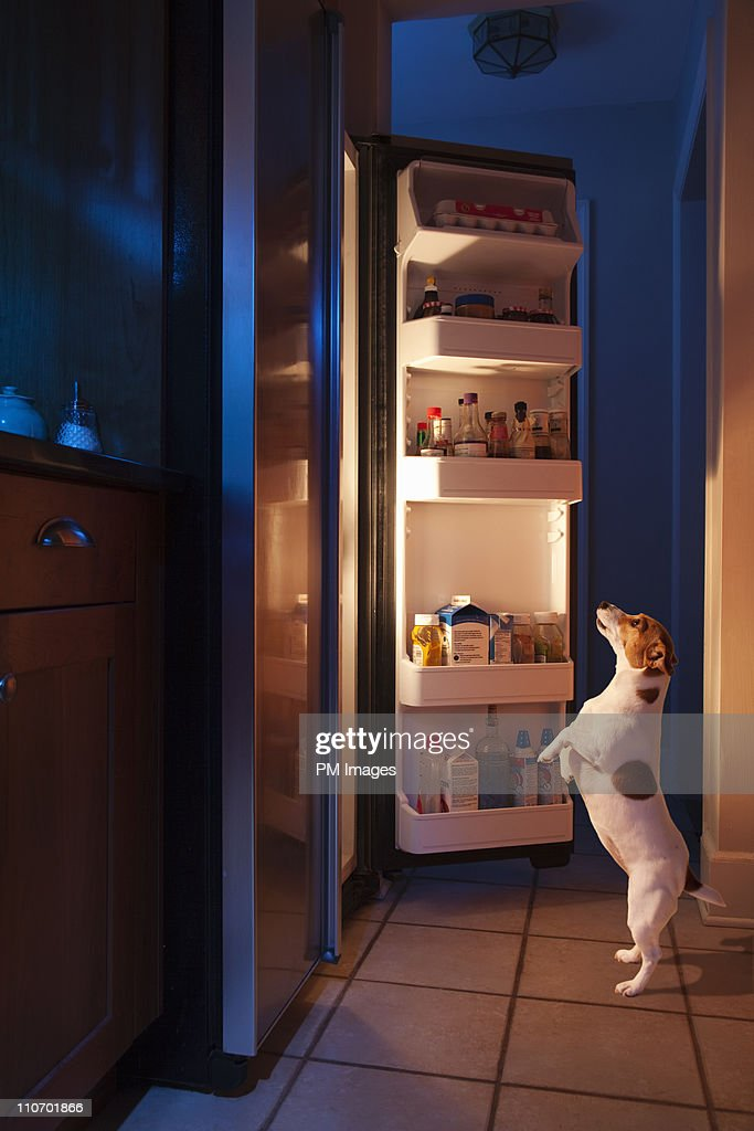 Dog looking into refrigerator : Stock Photo
