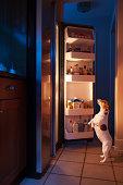 Dog looking into refrigerator