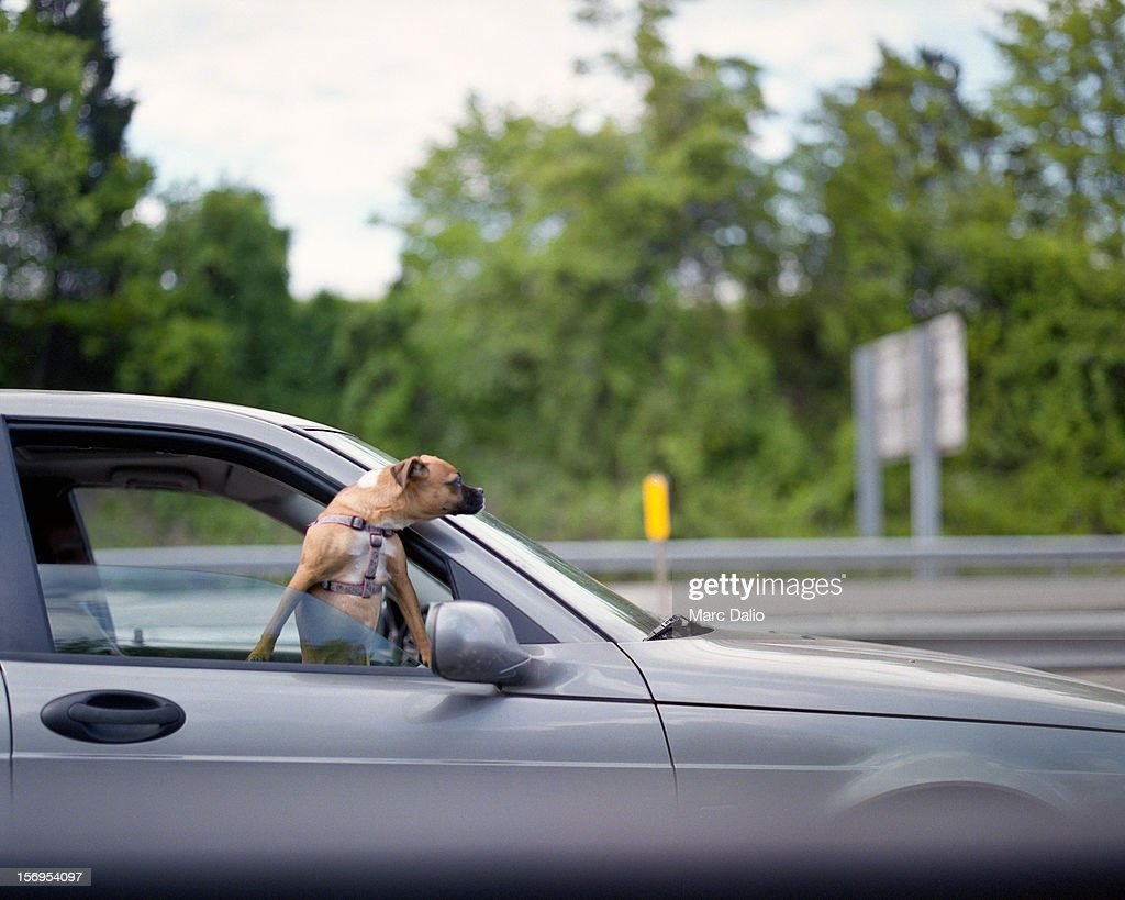 Dog Looking Out Car Window On Highway Stock Photo Getty Images