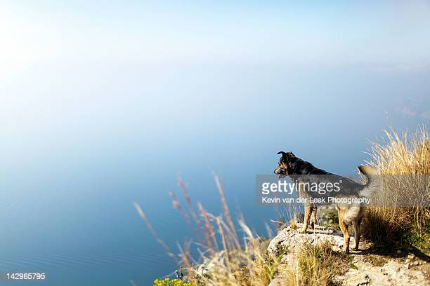 Dog looking over cliff