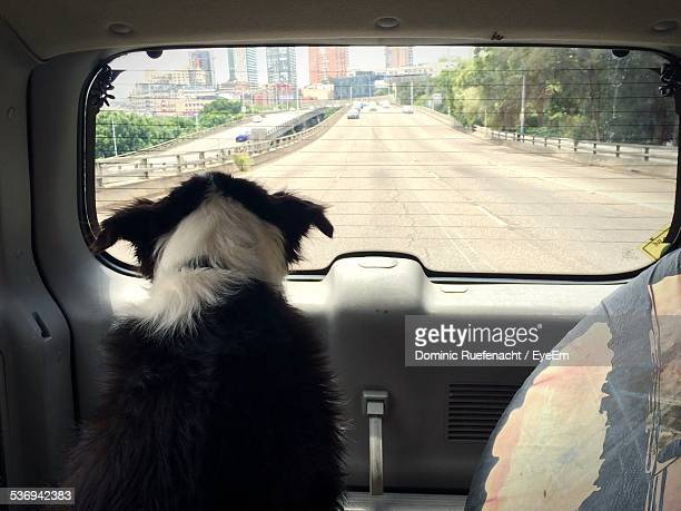 Dog Looking Through Rear Windshield