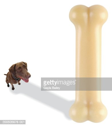 Dog looking up at bone (digital composite)