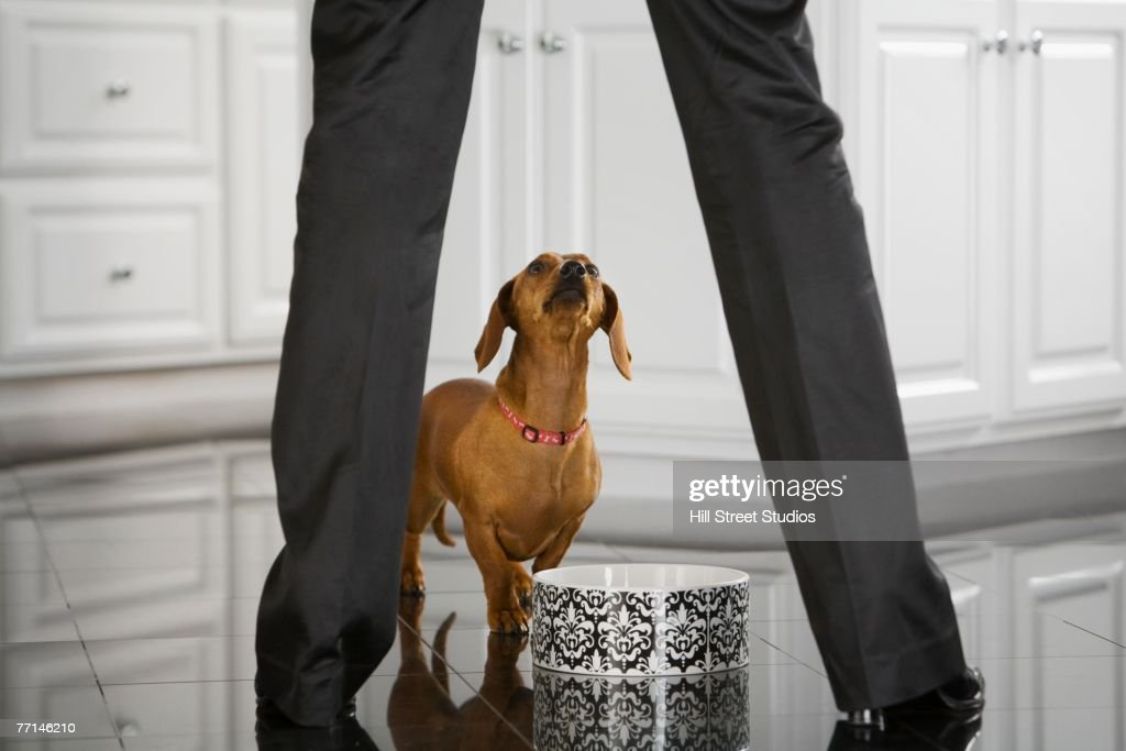 Dog looking up at owner : Stock Photo
