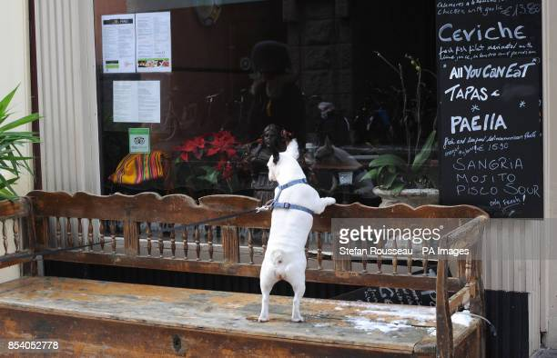 A dog looks into a shop window in Amsterdam