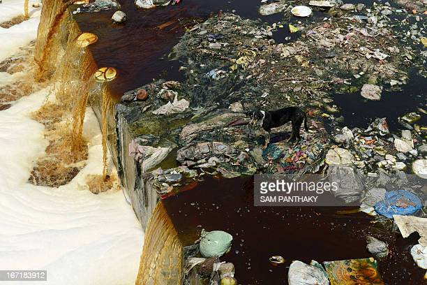 A dog looks on amid trash as polluted waters flow down a canal on the outskirts of Ahmedabad during World Earth Day on April 22 2013 World Earth Day...
