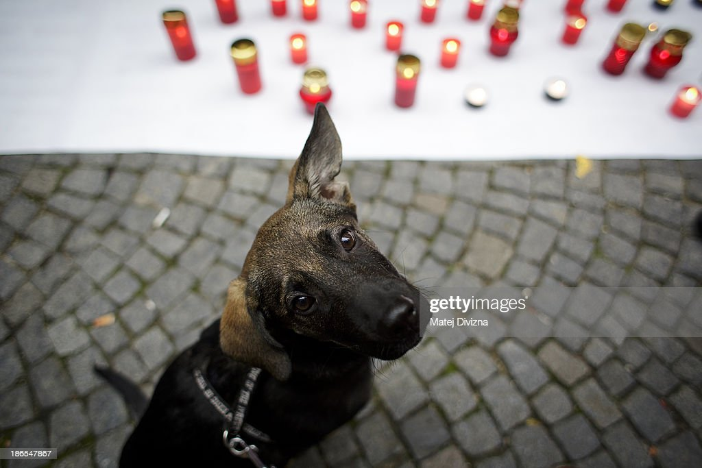 A dog looks on as it sits next to candles during an animal rights activists' protest in the All Saints' Day on November 1, 2013 in Prague, Czech Republic. Activists were protesting against the Romania law for stray dog culling approved by Romania's constitutional court in September this year. According to estimates 65,000 stray dogs live on the streets of Bucharest.