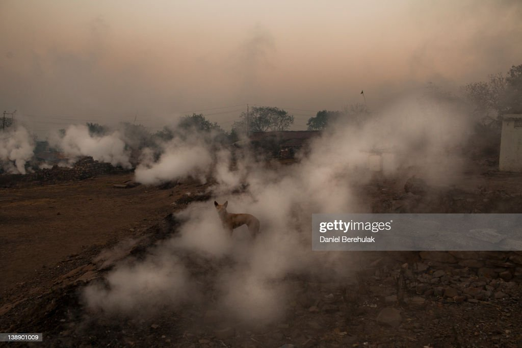 A dog looks out as noxious fumes eminate from fissures in the ground in the village of Jina Gora on February 11 2012 near Jharia India Villagers in...