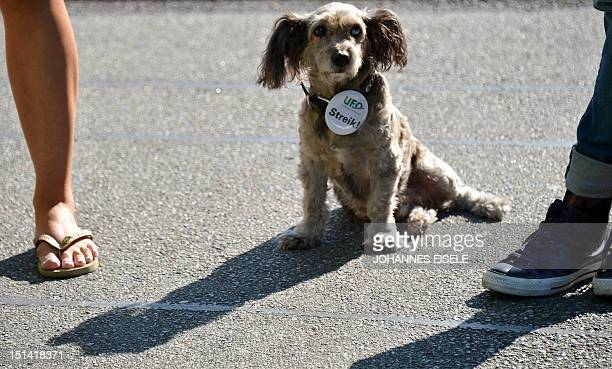 Dog Lui wears a badge reading 'strike' during a demonstration of German airline Lufthansa's staff at the Frankfurt am Main airport on September 7...