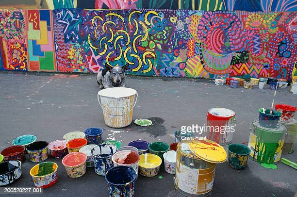 Dog lying in front of mural by paint tins, outdoors