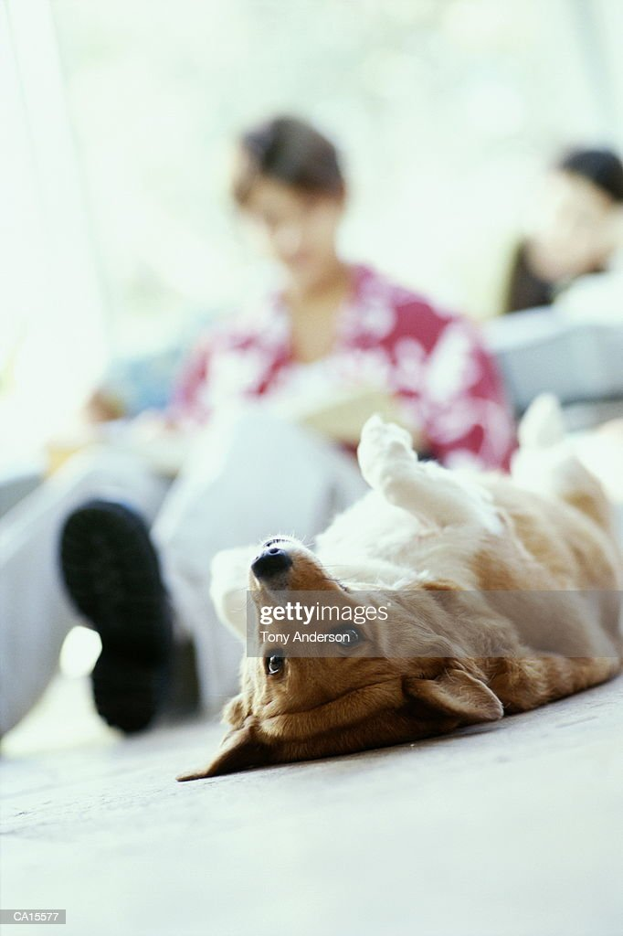 Dog lying on back, teenagers studying in background (focus on dog) : Stock Photo