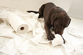 Dog lying on bathroom floor playing with lavatory roll