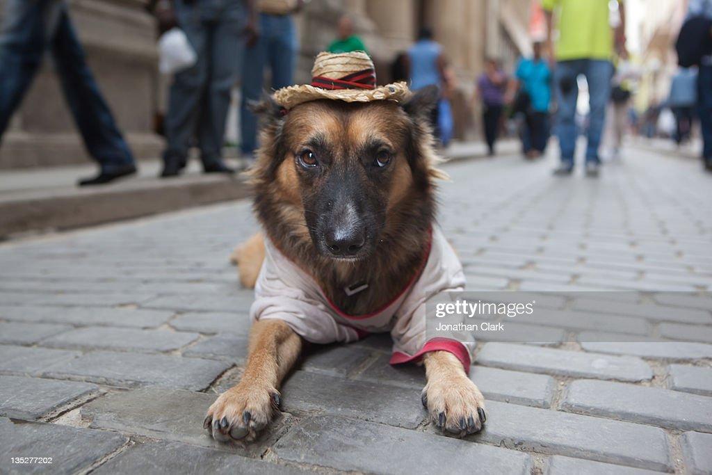 Dog lying on pavement : Stock Photo