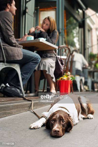 Dog Lying on Sidewalk Outside Sidewalk Cafe
