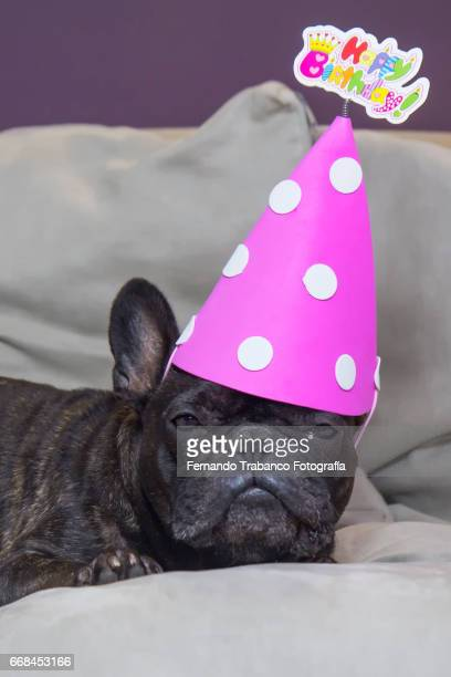 Dog lying on the sofa with a funny hat and happy birthday