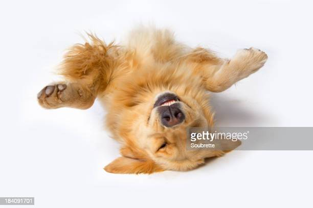 A dog lying upside down with its front paws up