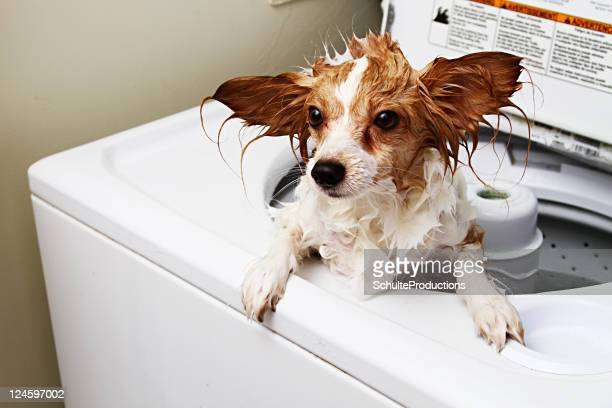 Dog Machine Washed