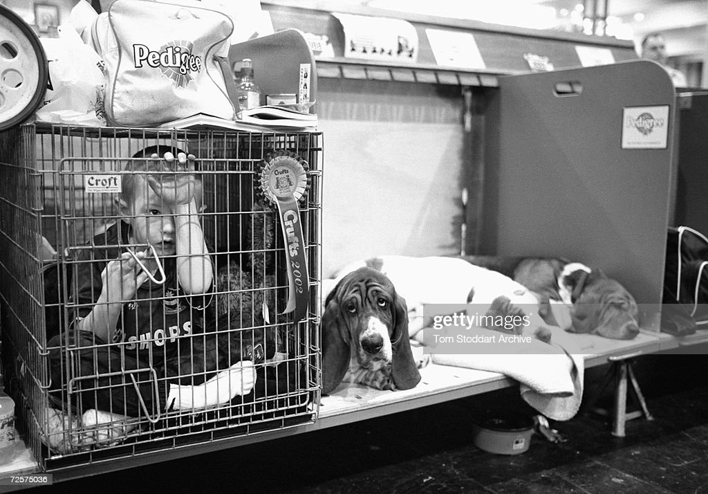 A Dog, Man's Best Friend - He is your friend, your partner, your defender, your dog. You are his life, his love, his leader. He will be yours, faithful and true, to the last beat of his heart. You owe it to him to be worthy of such devotion. A boy in a cage with winning Bassett Hounds at Crufts.